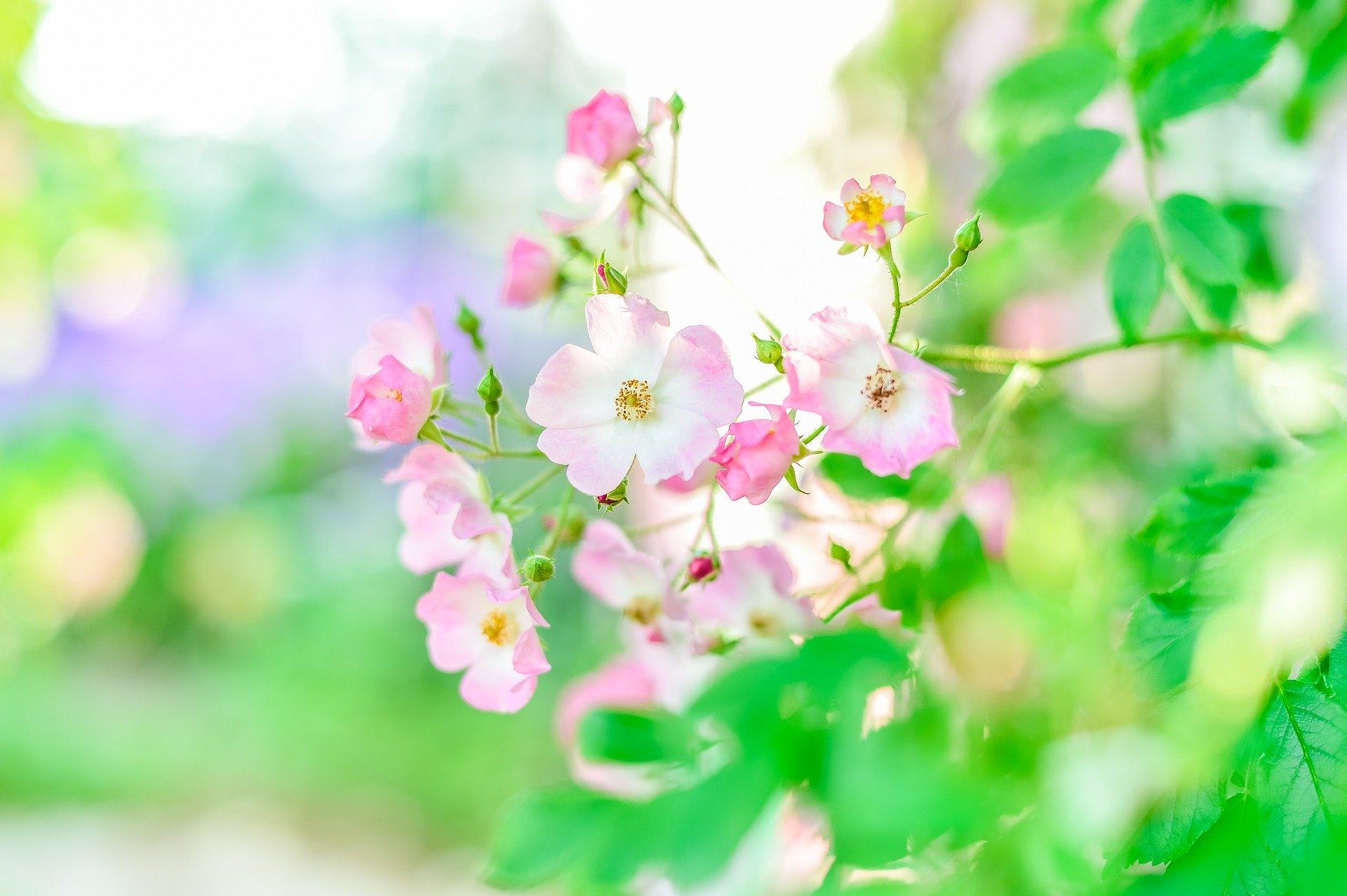 初夏イメージ画像