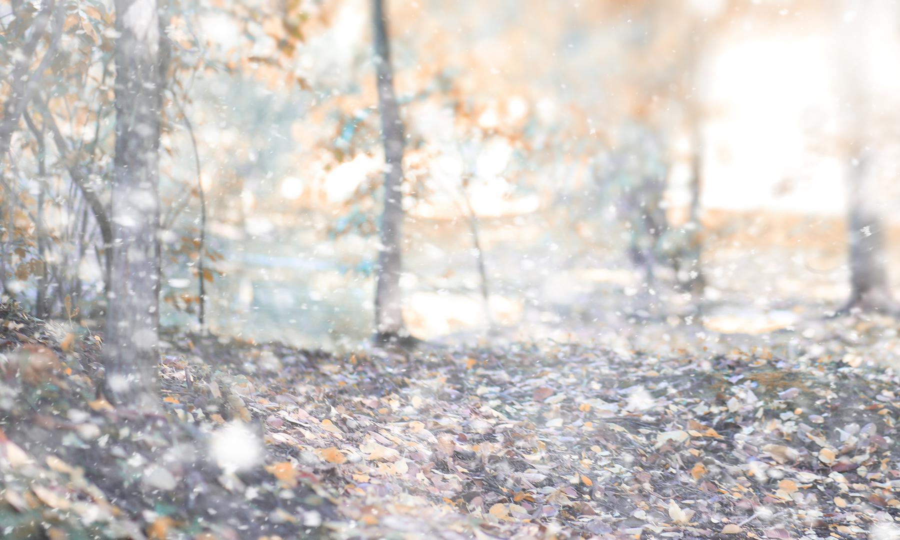 霜の降りる秋