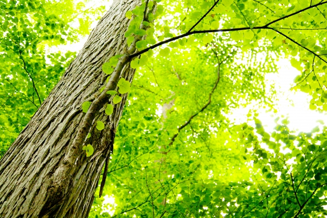 緑葉イメージ