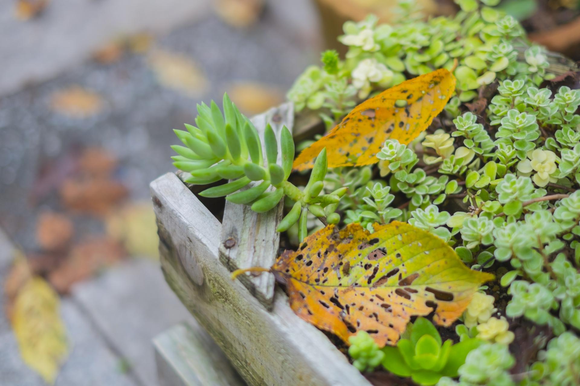 庭と落ち葉
